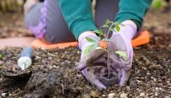 Готовим почву к посадке овощей