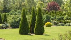 Использование хвойных деревьев в ландшафтном дизайне