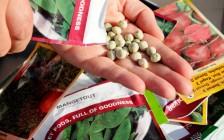 Как выбрать и подготовить семена