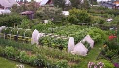 Расположение грядок в огороде
