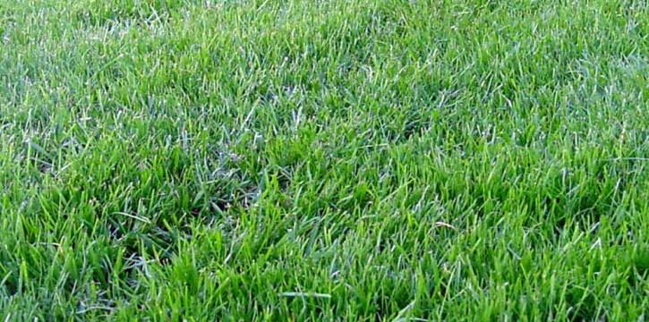 Зеленый газон преобразит участок до неузнаваемости