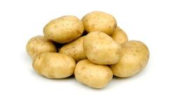Повышаем урожайность картофеля по голландской технологии