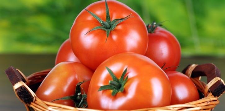 Выращивание томатов в теплицах