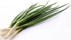 Тонкости выращивания лука на зелень