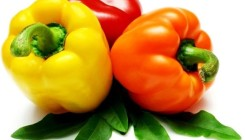 Болгарский перец: выбор сорта и посев семян