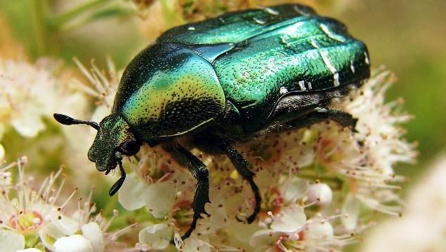 10 способов борьбы с личинками майского жука