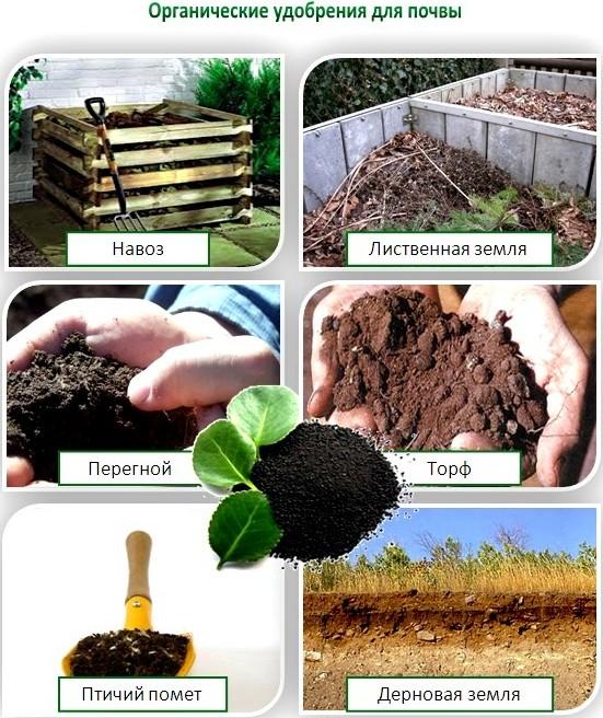 Способы внесения золы в почву