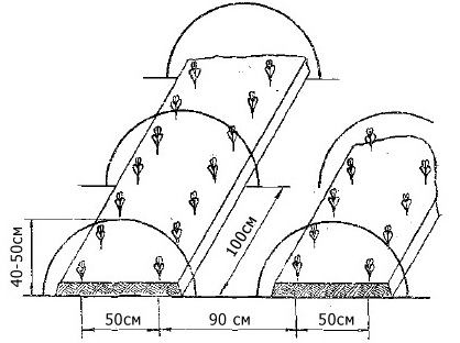 Схема посадки огурцов в открытом грунте