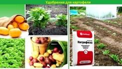 Какие удобрения нужны картофелю?