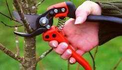 Весенняя обрезка в саду: как не навредить дереву