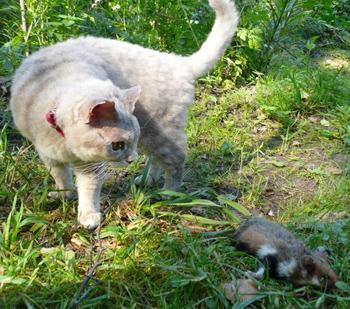 Кошка-лучший истребитель кротов