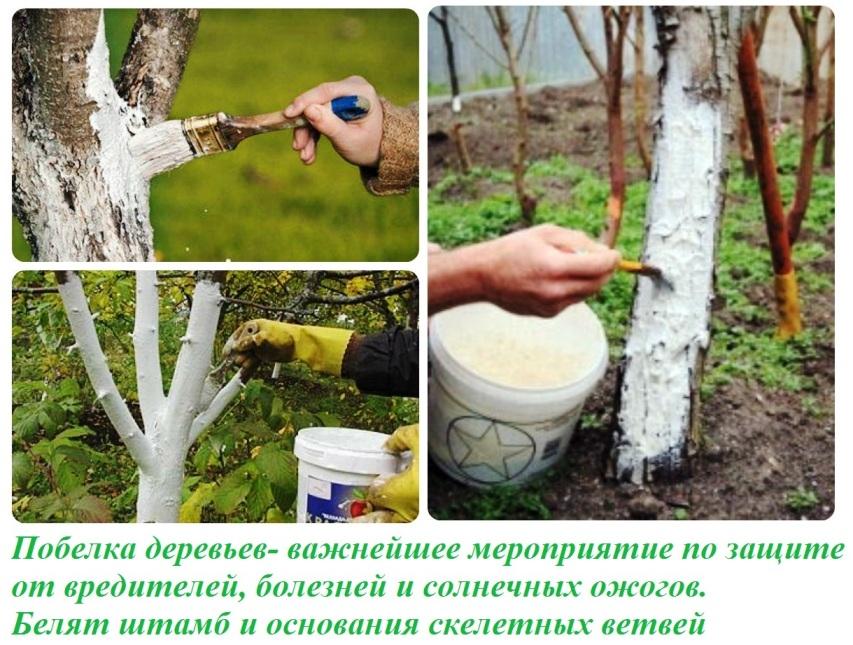 Побелка деревьев и кустарников