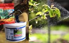 Весенние работы в саду: защита плодовых от болезней и вредителей