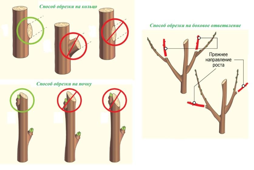 Способы обрезки плодовых деревьев и кустарников