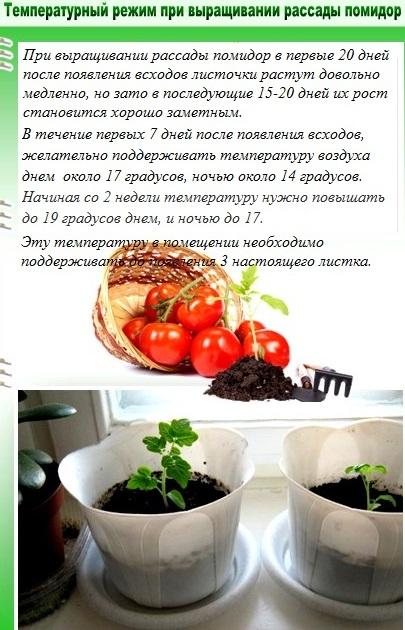 Температурный режим выращивания рассады помидор
