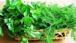 5 способов, как заготовить зелень на зиму