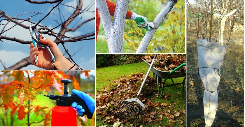 Обработка деревьев и кустарников осенью