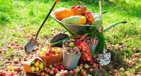 Осенние работы в огороде: сбор урожая