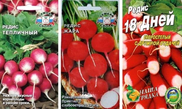 Выращивание редиса на подоконнике: выбор семян