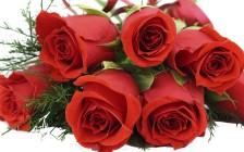 Основные аспекты черенкования роз