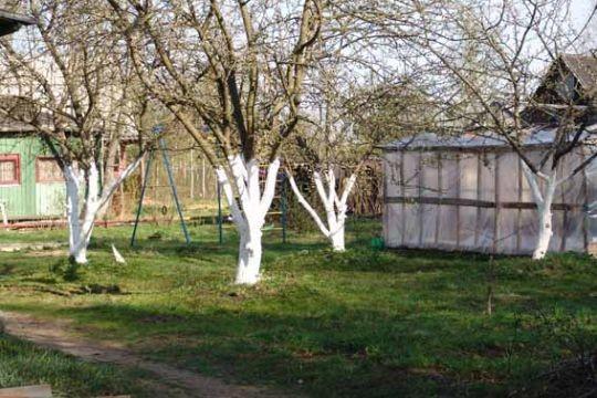 Реабилитация деревьев и кустарников после зимы