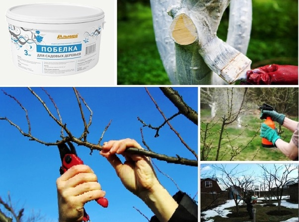 Уход за садовыми деревьями и кустарниками