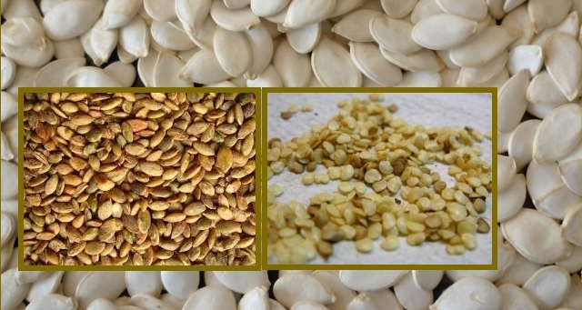 Предпосевная подготовка семян: сортировка семян