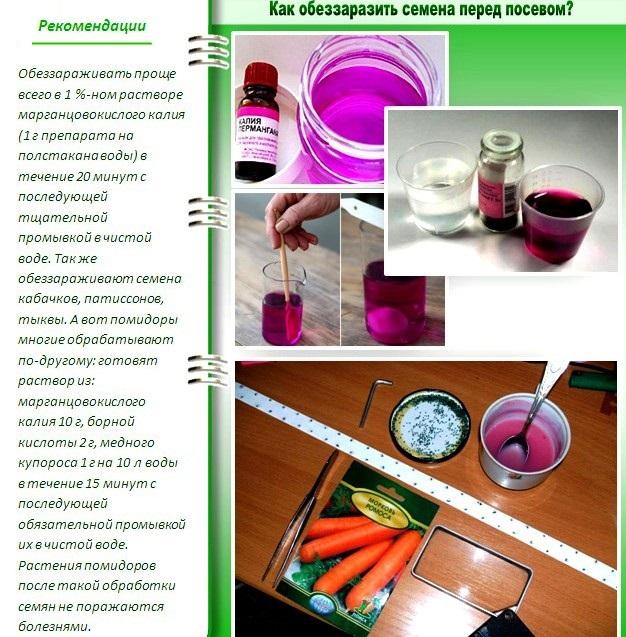 Предпосевная подготовка семян: обеззараживание семян