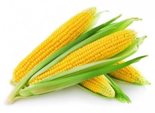 Кукуруза: выращивание и уход